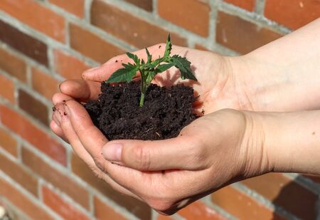 Human hands of a young woman holding green small plant seedling. New life concept.