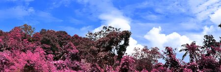 Beautiful purple and pink infrared panorama of a landscape on the Seychelles Islands.