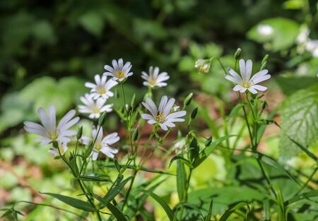 Beautiful flowers in a european garden in different colors. Foto de archivo