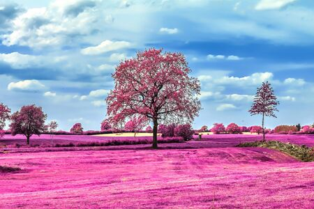 Beautiful pink infrared shots of a countryside landscape with a deep blue sky Foto de archivo - 149578093