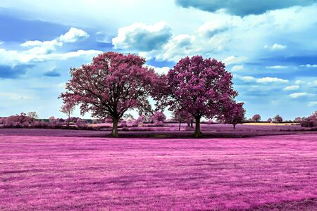 Beautiful pink infrared shots of a countryside landscape with a deep blue sky Foto de archivo - 149579066
