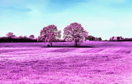 Beautiful pink infrared shots of a countryside landscape with a deep blue sky