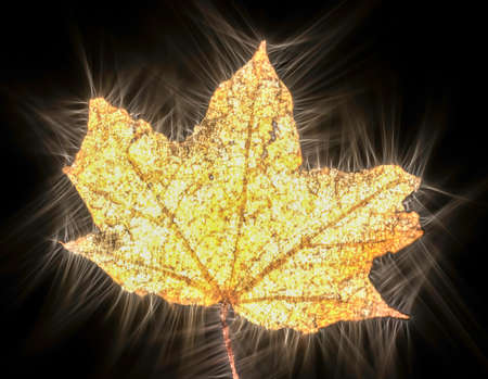 Kirlian glowing photography of beautiful autumn leaves showing a lot of energy
