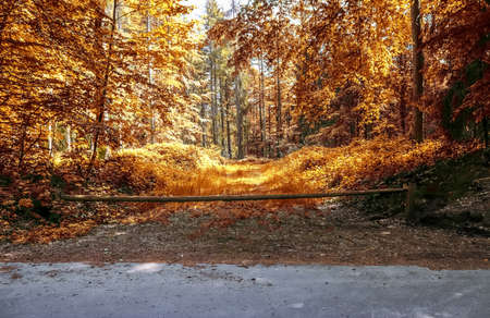 Beautiful panorama view on a golden autumn landscape in the middle of october Standard-Bild