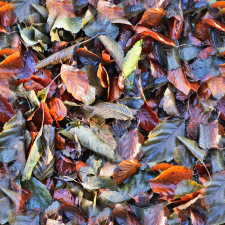 High resolution seamless texture of a forest ground with autumn leaves and nuts