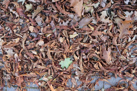 Detailed close up view on a forest ground texture with lots of leaves