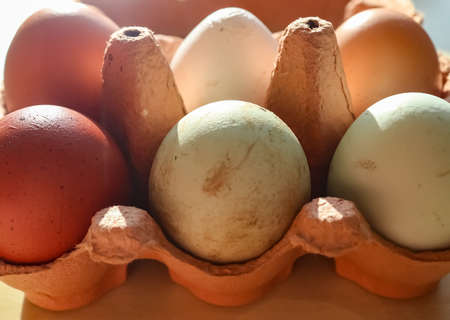 Selective focus view at a box with eggs in brown green and white colors 版權商用圖片