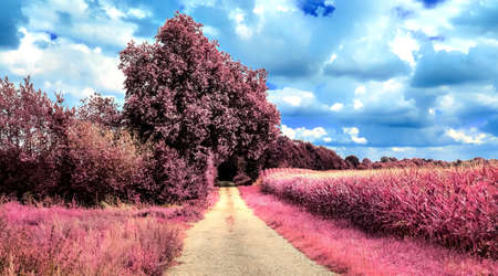Beautiful purple infrared landscape with a magical look in high resolution