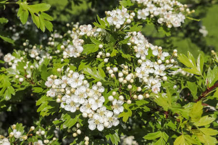 Beautiful cherry and plum trees in blossom during springtime with colorful flowers. Standard-Bild