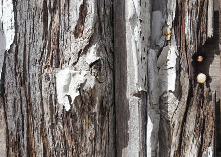 Detailed close up view on different wood surfaces showing planks logs and wooden walls in high resolution Standard-Bild