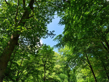 Beautiful view into a dense green forest with bright sunlight casting deep shadow.