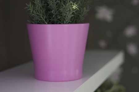 Pink flowerpot closeup photo Stock Photo