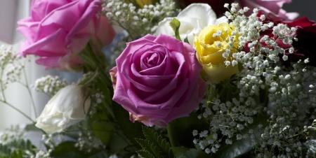 Pink rose at colorful rosebush Stock Photo - 13637589