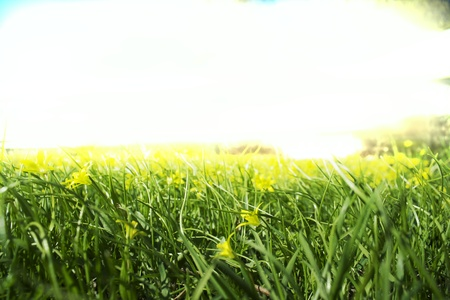 Grass and flowers in bright sunshine Stock Photo - 13718498