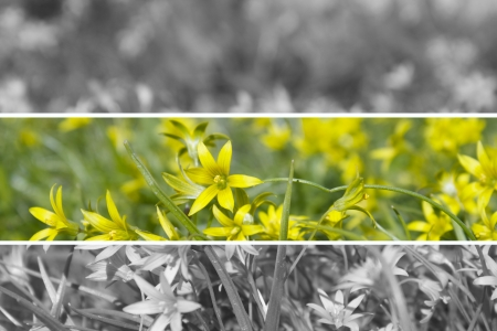 Yellow wood anemone picture with frames Stock Photo - 13718501
