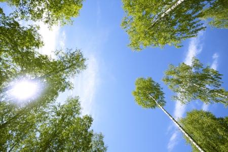Uzun boylu ağaçlar, yeşil yapraklar ve mavi gökyüzü