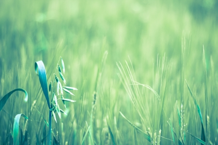 Beautiful green field detail closeup macro shot Stock Photo - 14780818