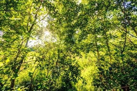 Sun shining behind green leaves in nature Stock Photo - 14780819