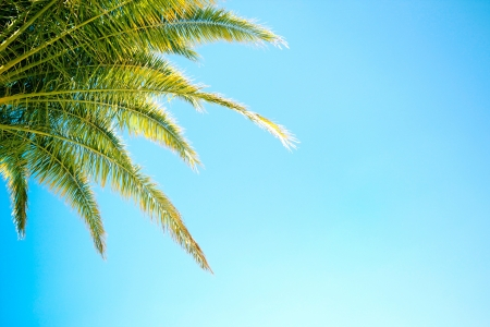 Green palm tree leaves on blue sky backgorund Stock Photo - 14780817