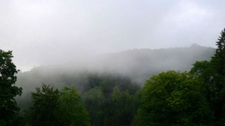 west of germany: A picture of a misty forest after heavy rainfall, south west Germany