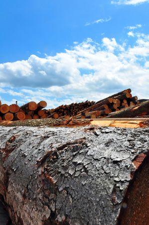 sawmill: A shot of huge trunks at a german sawmill