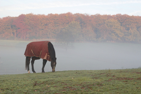 Horse with a blanket or horse cover in the November