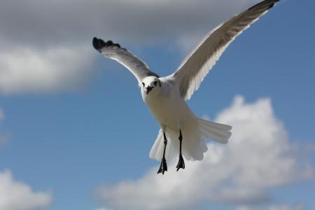 Uma gaivota curiosa em v