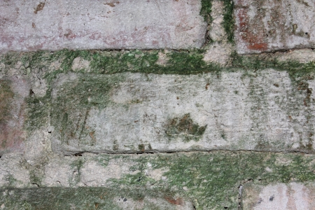 Close up of a section of a moss covered brick wall Stock Photo