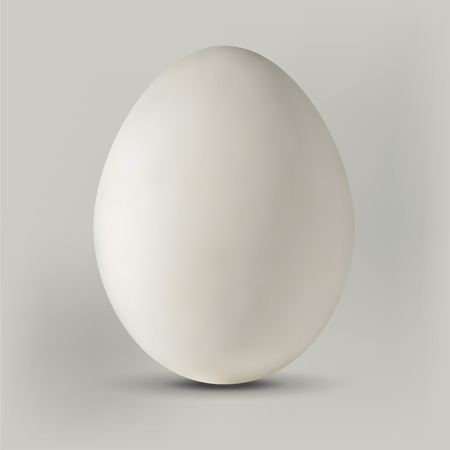 Realistic egg illustration