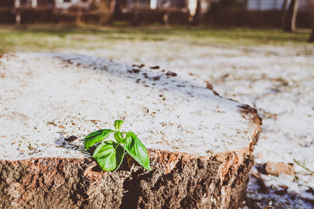 Green Sprouting Plant On A Wooden Stump