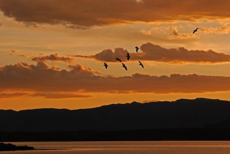 Flock of pelicans flying over Walden Reservoir at sunset with warm clouds in the background over the mountains photo