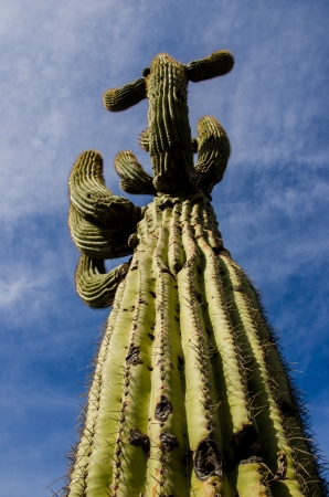 compostion: A tall, single saguaro cactus stretches to the sky in Lake Pleasant Recreation Area north of Phoenix, Arizona.