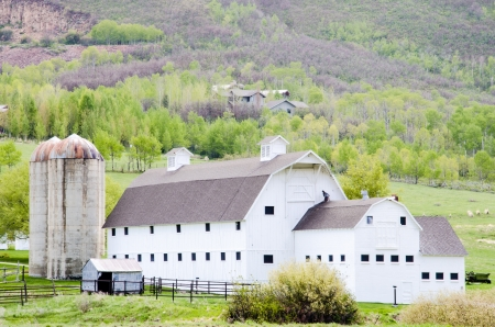 wasatch: Large, historic white barn at foot of Wasatch Mountians near Park City in flat, light rain