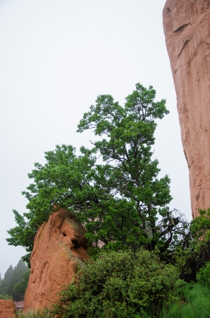 compostion: A foggy morning provides a high key background along a trail in Garden of the Gods Park, Colorado Springs, Colorado Stock Photo