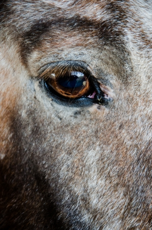 compostion: Close-up image of brown, tan and white horses eye Stock Photo