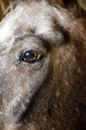 compostion: Close-up of horses head and eye in natural barn light