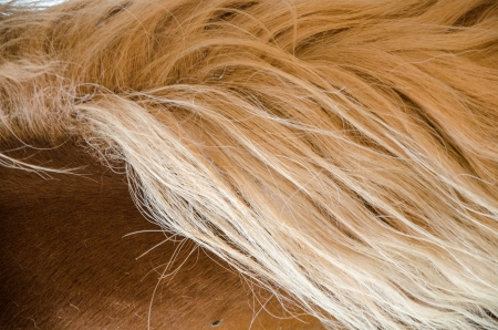 compostion: Close-up of blond mane of horse in barn  Stock Photo