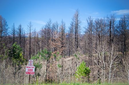 Sign shows that the forest is closed due to devastating impact of Waldo Canon fire off of Rampart Range Road near Woodland Park, Colorado  Imagens