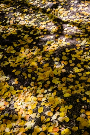 Colorful autumn leaves on foret floor with abstract shadows, Mt. Pisgah Cemetary, Cripple Creek, Colorado. photo