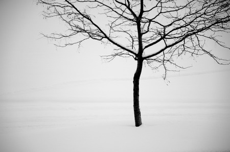 compostion: Black and white image of single tree against white snow background makes peaceful image with white space.