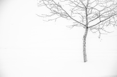 Lone tree in fresh snow at park makes nice minimalist compostion with plenty of white space