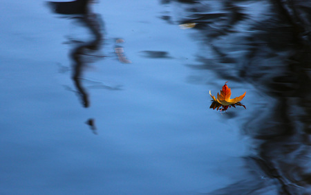 leaf water: Floating leaf on the waters Stock Photo