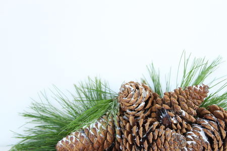 Fresh December pine cones and evergreens frame white copy space.