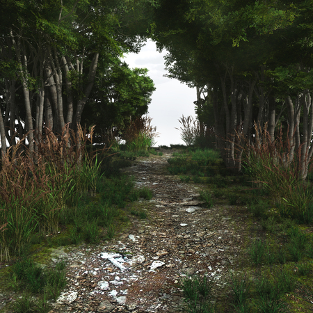 Pebbled Waldweg