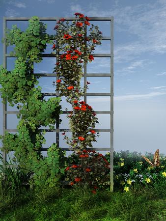 flowery: Flowery pergola in the garden Stock Photo