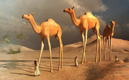 birds desert: Walking camels