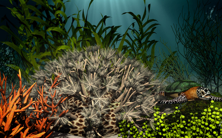 anemone: Underwater scenery with anemone and turtle Stock Photo