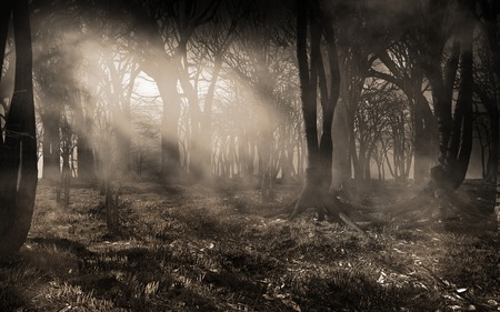 霧と木漏れ日の森風景