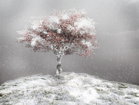 snow covered: Snow covered tree on top of the hill Stock Photo