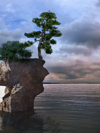 lonely tree: Lonely tree on the sea rock